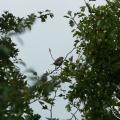 Fotografie ptaków - Wróbel